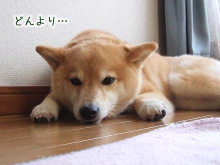 20120425-karin_12_68.jpg