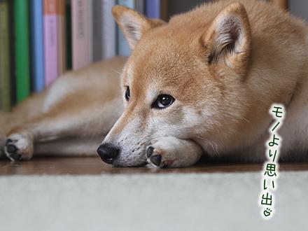 20120926-karin_12_148.jpg