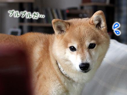 20121006-karin_12_157.jpg