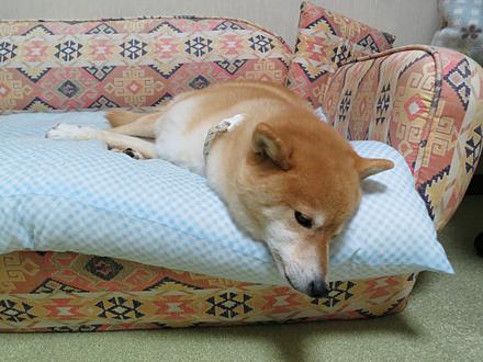 20121209-karin_12_191.jpg