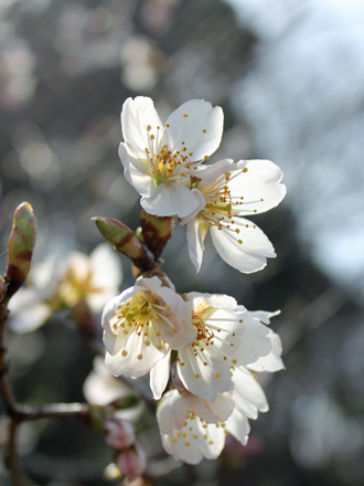 20130320-other_13_5.jpg