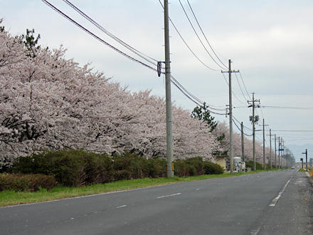 20130403-other_13_7.jpg