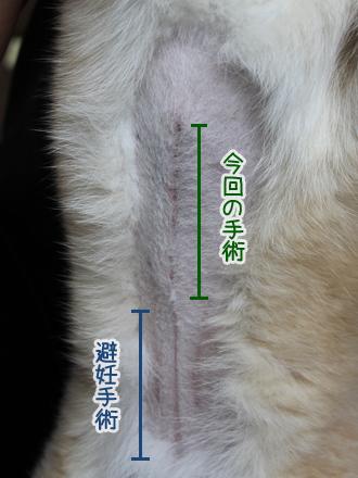 20130502-karin_13_71.jpg