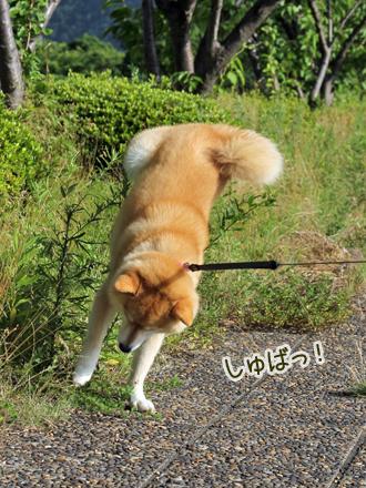 20130718-karin_13_109.jpg