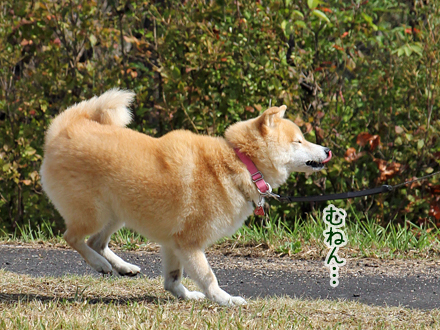 20140928-karin_14_122.jpg