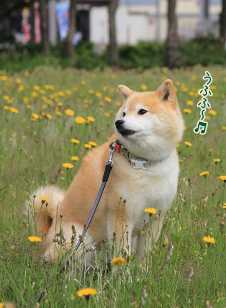 20160518-karin_16_068.jpg
